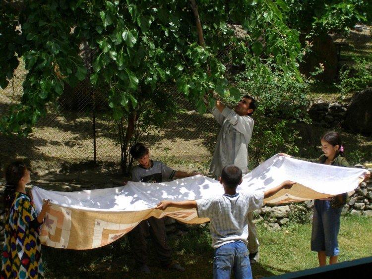 Picking mulberries in Tajikistan