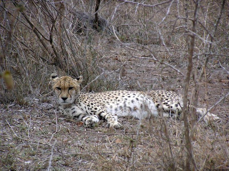 Hlane Royal National Park, Swaziland