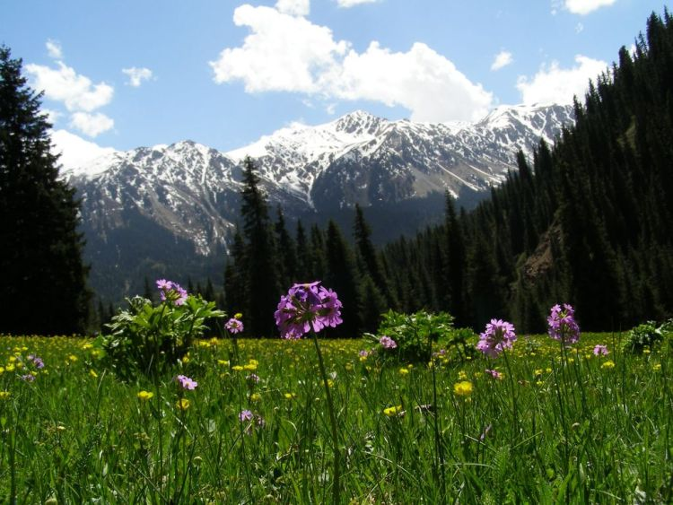 Valley of the Flowers, Kyrgyzstan