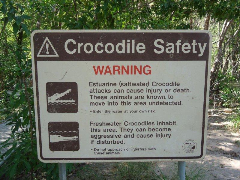 Saltwater Crocodiles, NT, Australia