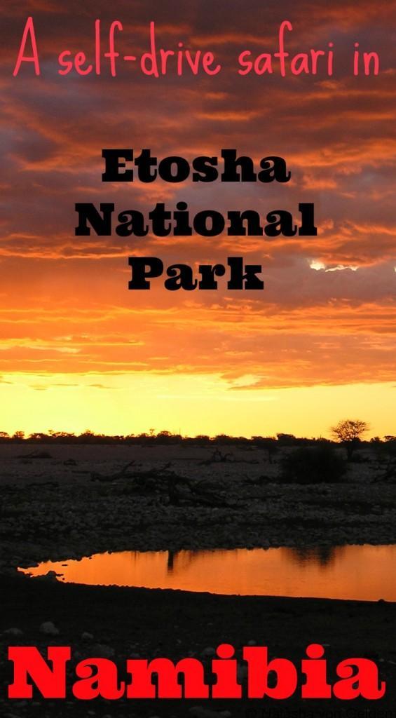 Self drive safari in Etosha National Park Namibia
