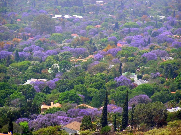 Things to do in Johannesburg and Pretoria