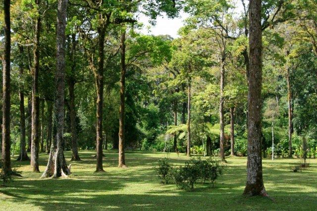 Bali Botanical Gardens, Bedugul