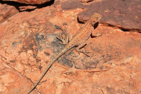 King's Canyon Rim Walk, Australia's Red Centre-007