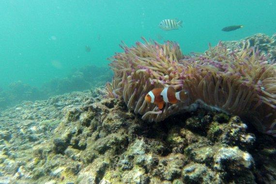 Snorkeling Tunku-Abdul-Rahman-Park-Malaysia