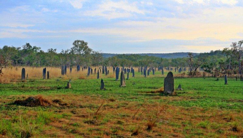 Magnetic termite mounds, Litchfield National Park NT Australia