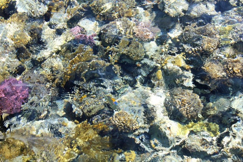 Sea life in Egypt's Red Sea - Soma Bay