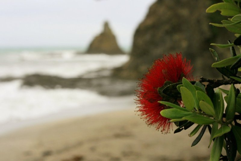 Nga-Tapuwai-o-Toi hike Whakatane New Zealand pohutakawa