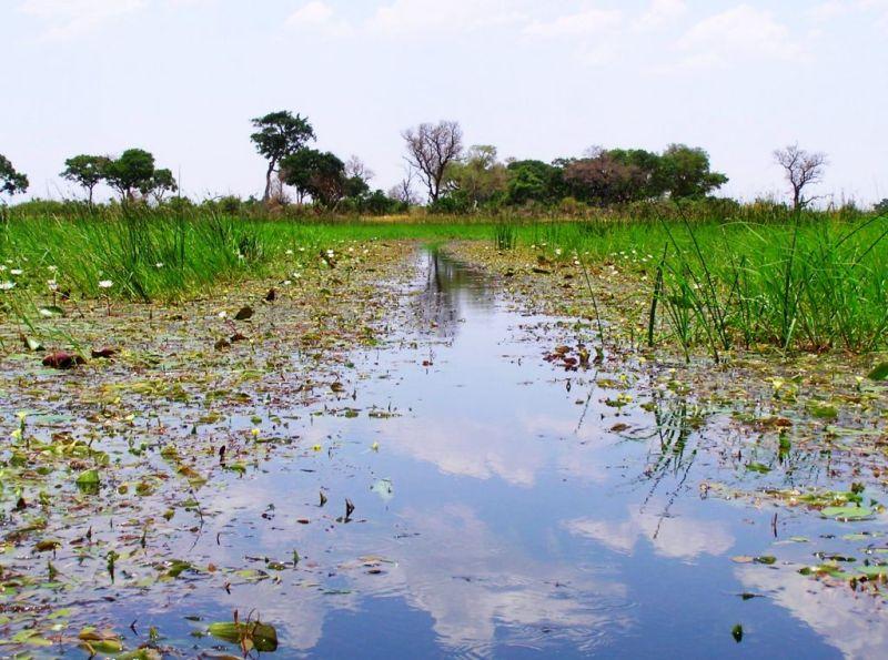 Mokoro trip in the Okavango Delta, Botswana