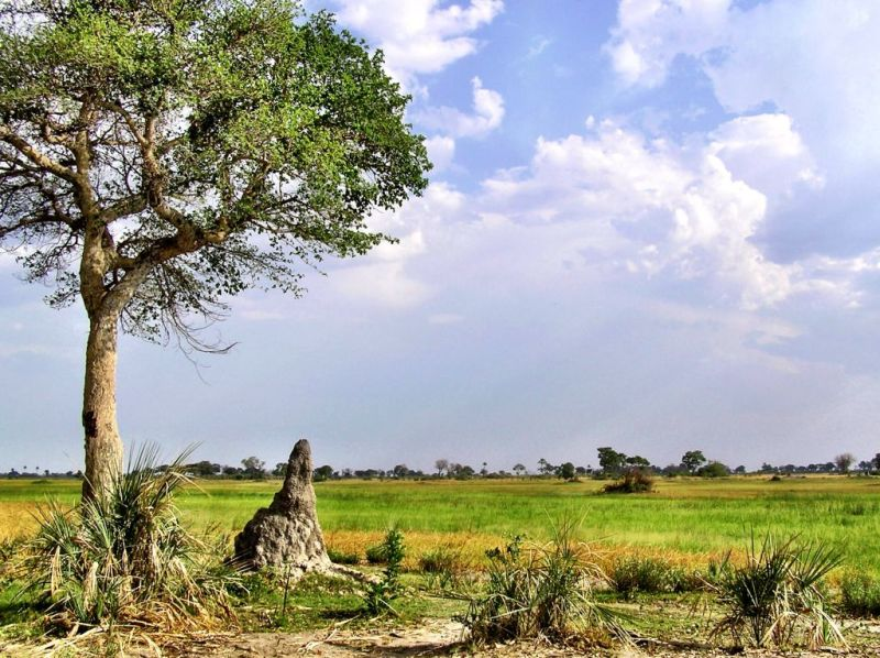 Savannah in the Okavango Delta, Botswana