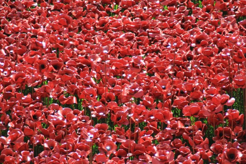 Blood swept lands & seas of red, Tower of London poppies
