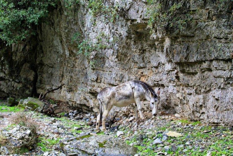 Imbros Gorge donkey Crete