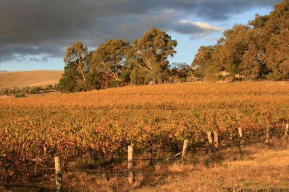 The Barossa Valley, South Australia