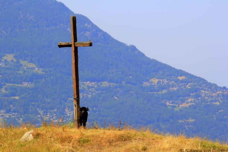 Alp Bovine Tour du Mt Blanc Switzerland