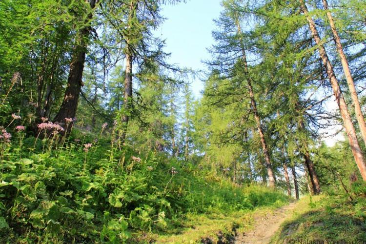 Hiking above Ferret, Switzerland TMB