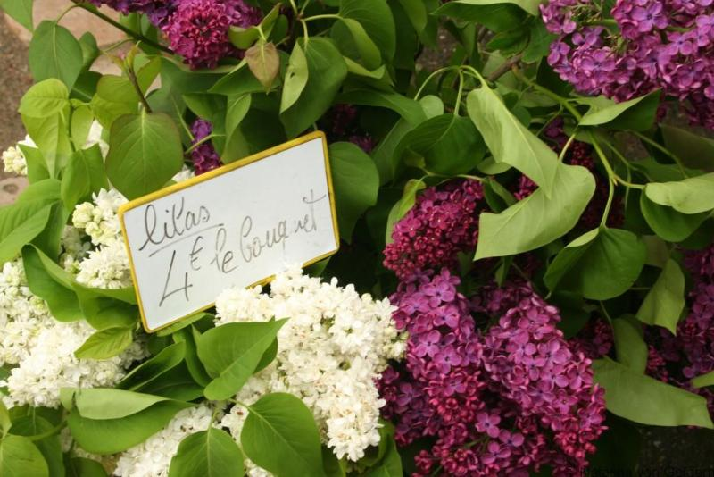lilacs in a french market
