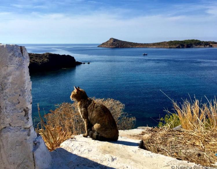 Kalymnos views and cats Greece