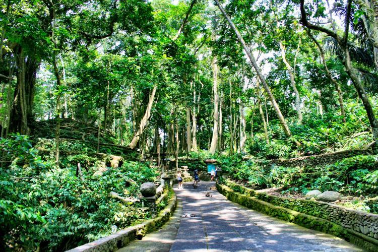 Ubud-Sacred-Monkey-Forest-Bali-Indonesia