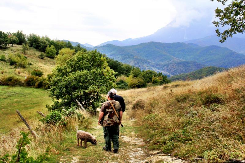 Going on a truffle hunt in Le Marche Italy