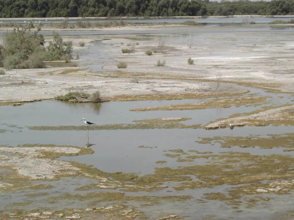 Ras-al-Khor Nature Reserve, Dubai