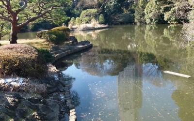 Springtime in Tokyo's Shinjuku National Garden