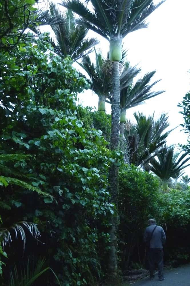 Native Plants Trail, Punakaiki