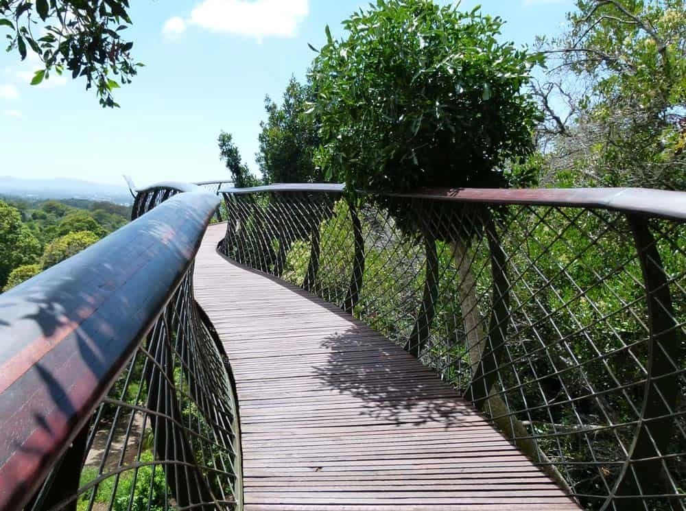 Boomslang, Kirstenbosch Botanical Gardens