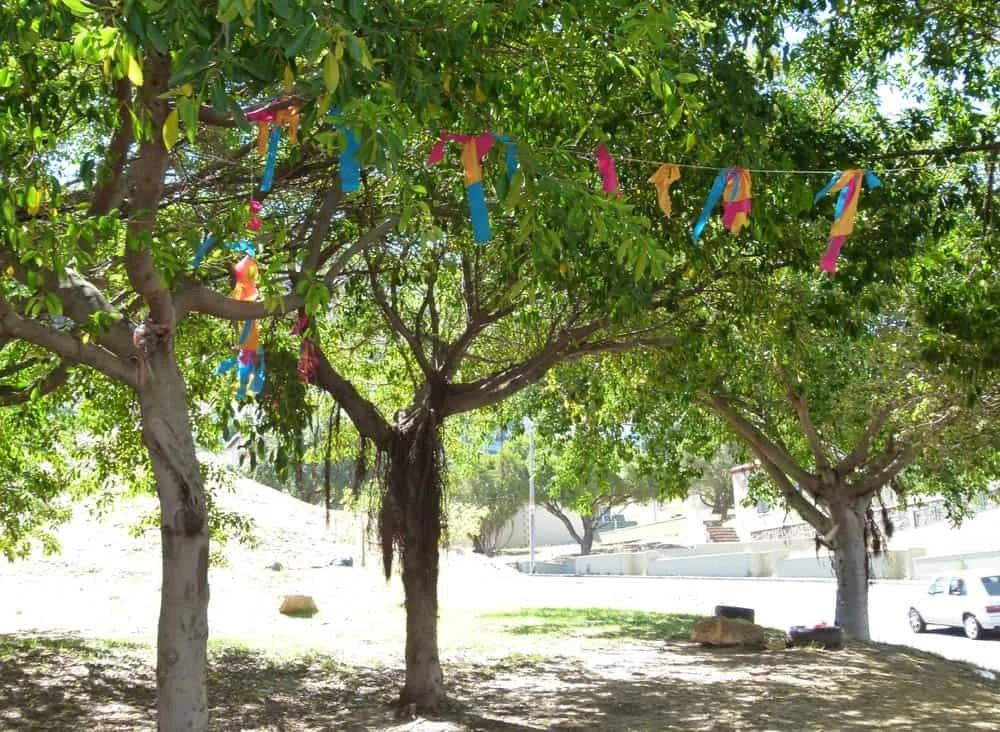 Decorated trees, Bo-Kaap