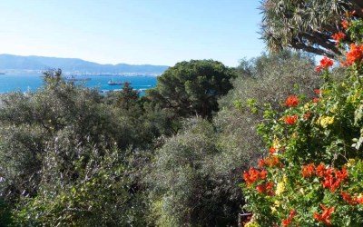 Exotic Plants and Molly Bloom: the Alameda Botanic Gardens, Gibraltar