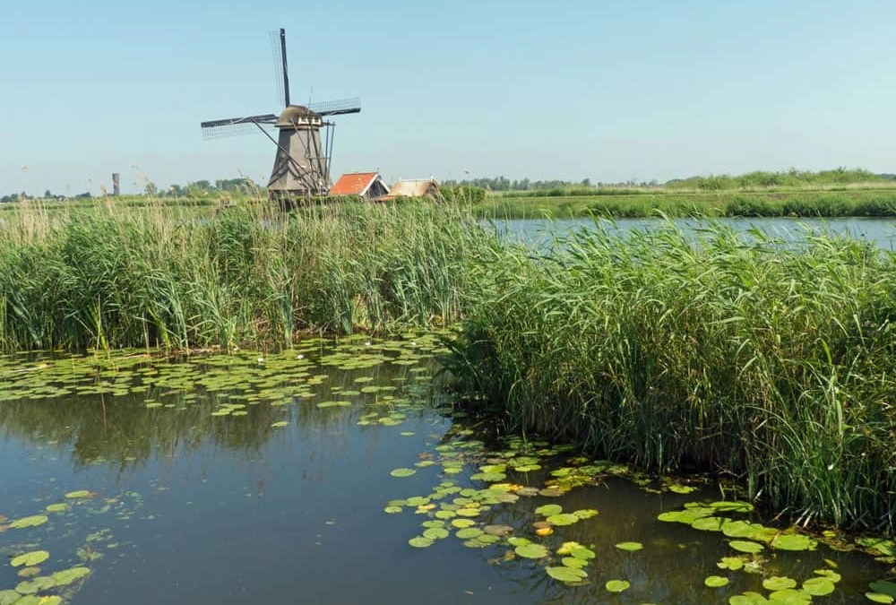Kinderdijk and its Windmills: A Day Trip from Rotterdam