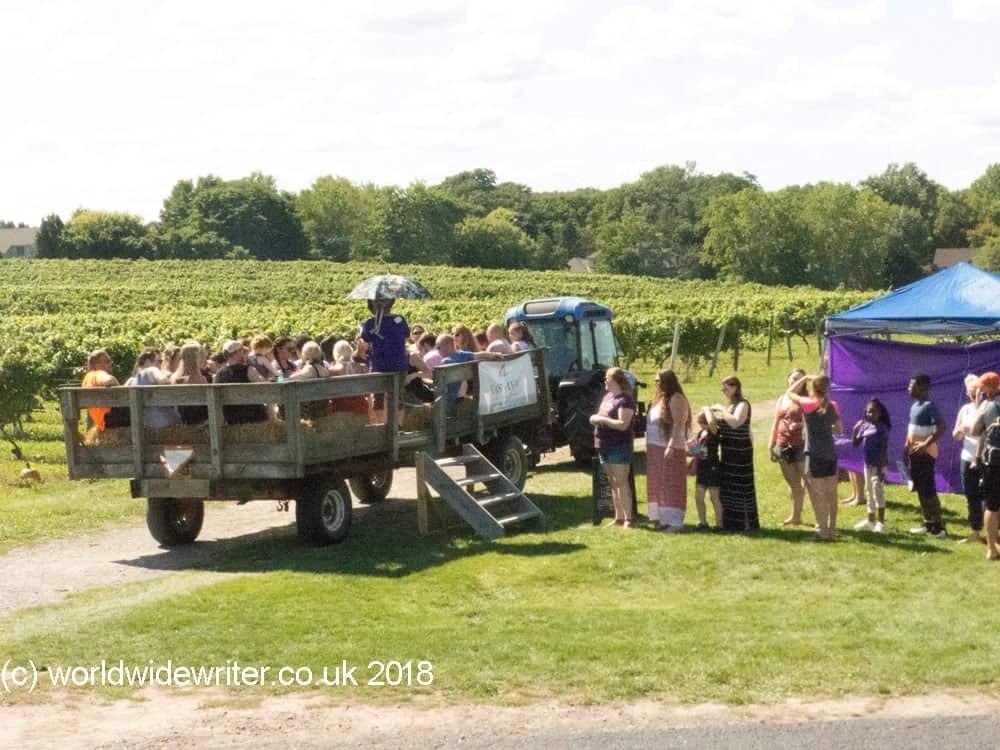 Purple Foot Festival, Casa Largha Vineyard, Rochester NY
