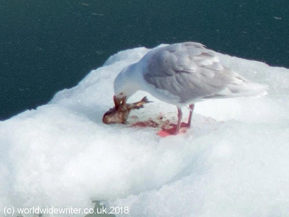 Bird on an iceberg