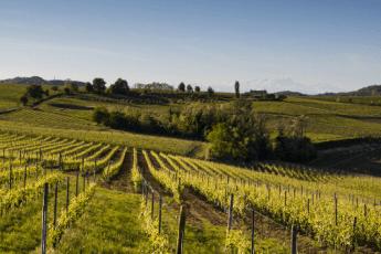 lekkerste wijnen buitenland