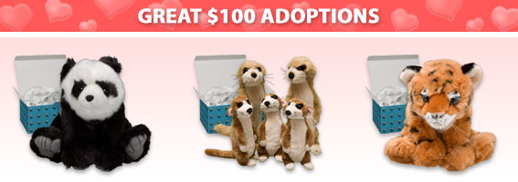 Great $100 Adoptions