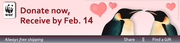 Donate Now, Receive by Feb. 14