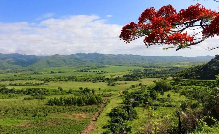 L'île possède une grande variété de paysages. À côté de ses plages paradisiaques, on retrouve également des chaînes de montagnes à la nature luxuriante. Ici, nous sommes devant un panorama sur la Sierra de Banao. Les arbres flamboyants poussent un peu partout à Cuba. © Lucie Martin/Worldzine