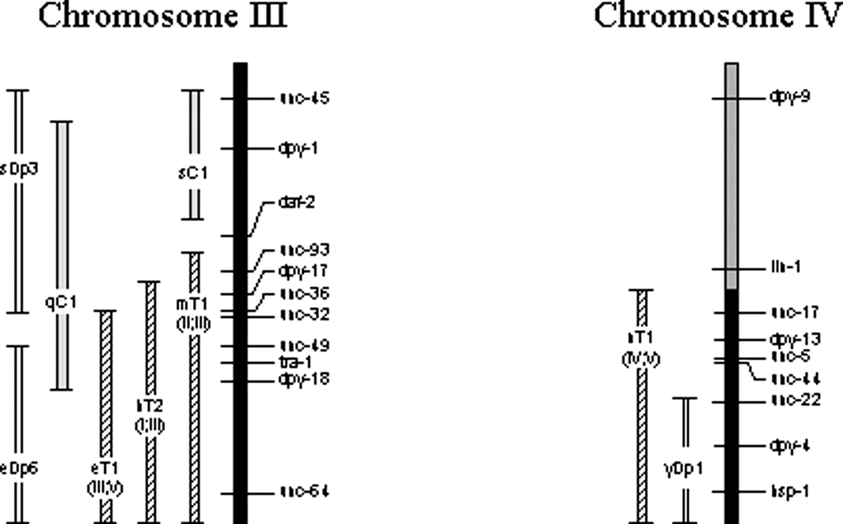Chromosomes And Genes Worksheet Easy