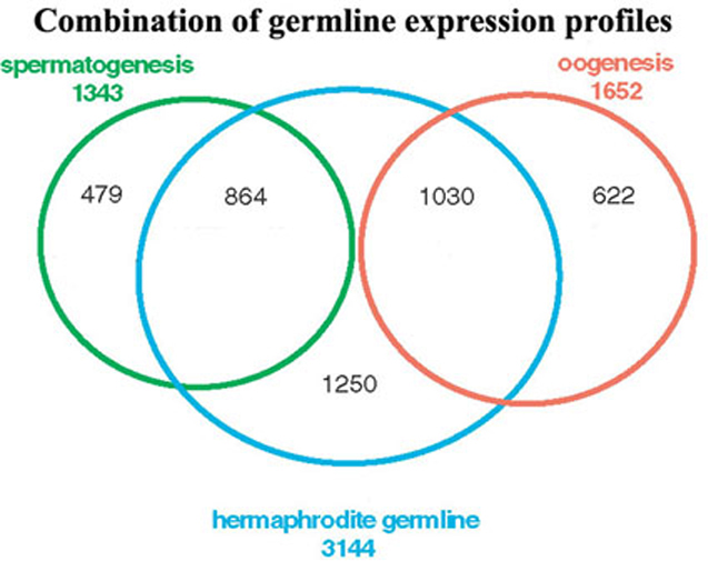 Image result for genes in the germline