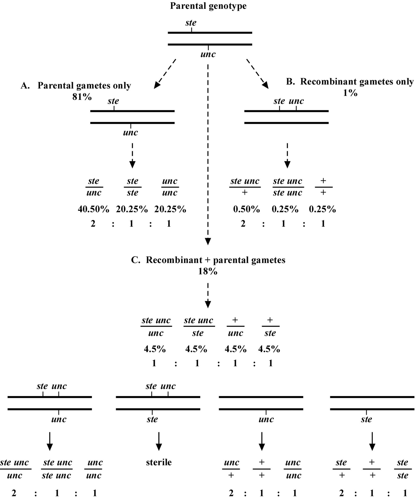 Worksheets Chromosome Mapping Worksheet Waytoohuman Free