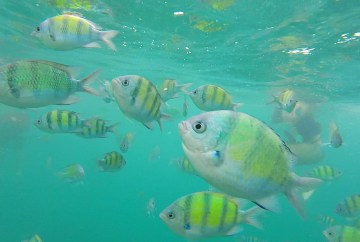 Colorful fish snorkeling in Pileh Bay | Koh Phi Phi | Things to do in Thailand