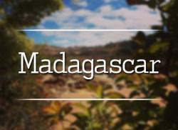 panel_madagascar_550x400