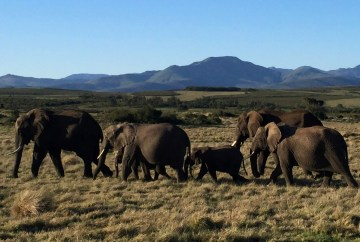 Elephants at the Gondwana Game Reserve | Travel guide to visit South Africa
