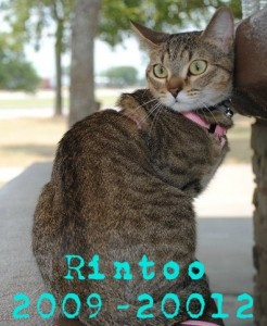 Rintoo - 2009-2012