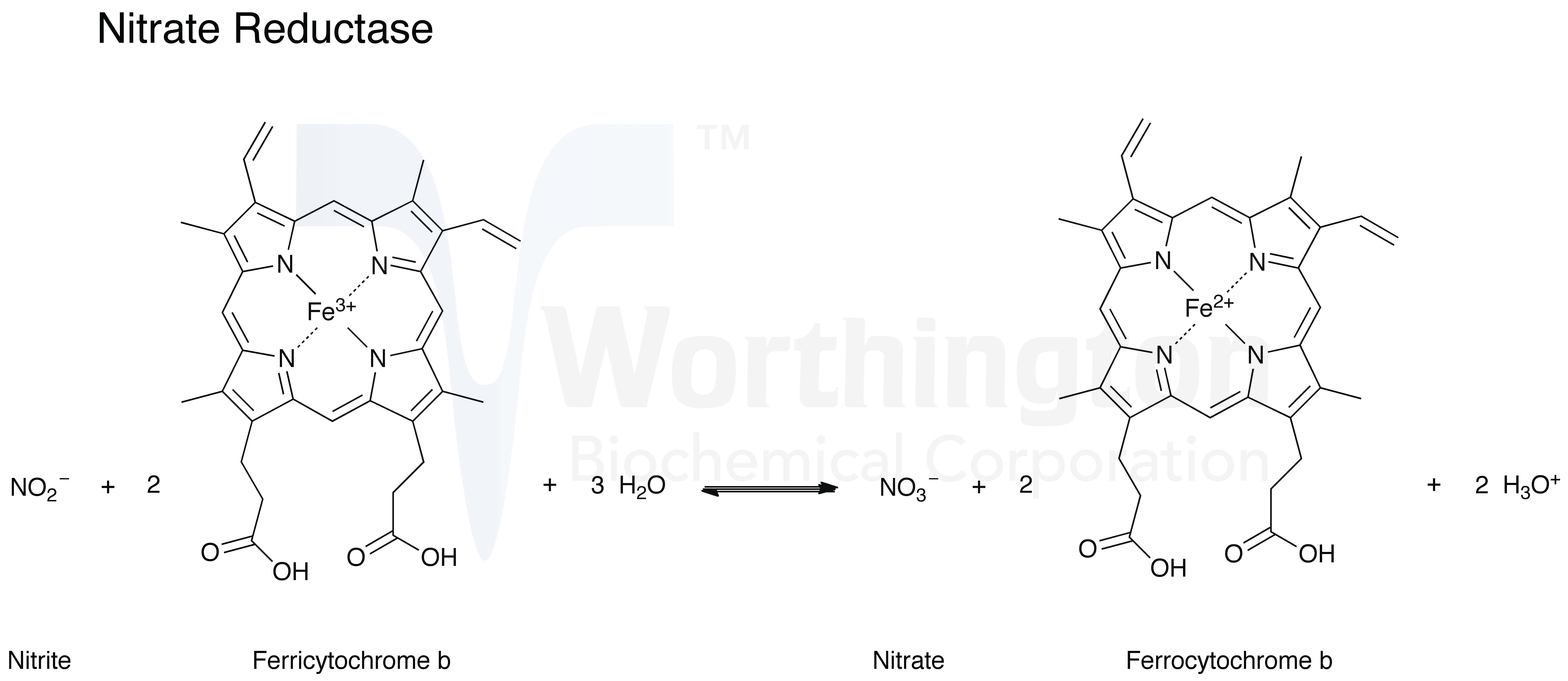 Nitrate Reductase