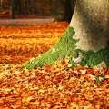 Herbstlaub entfernen - Pixabay