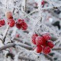 10 Tips for Winter Landscapes