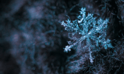 Winter Lawn-Care: Best Tips To Protect Your Yard This Winter