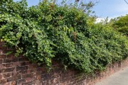Learn How To Reign In Overgrown Shrubs