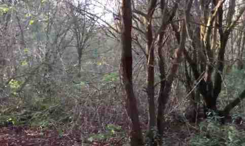 the-most-haunted-place-in-england-screaming-woods