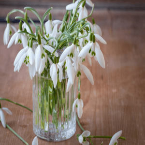 lilies (2)
